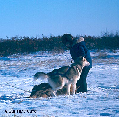 Boy and sled dog photo.jpg