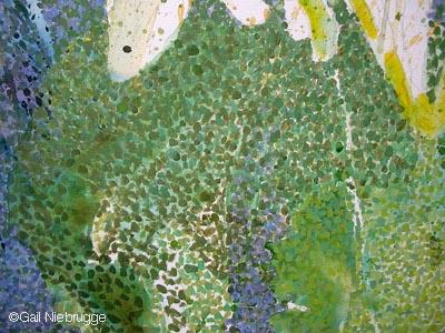SunflowerbottomL1.jpg