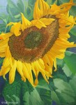 "Original Painting ""Sunflower"" Finished!"