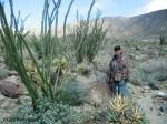 Borrego Cactus Loop Trail