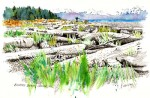 Buy Ink and Watercolor Drawing of Bishops Beach, Homer