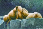 Buy Original Painting of Steller Sea Lions