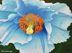 Blue Poppy Painting Finished!