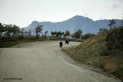 roadbears
