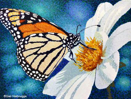 monarch81