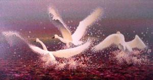 "Buy Trumpeter Swan Art Print - Spirit of Flight 14"" x 26"""
