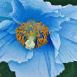 "Buy ""Blue Poppy"" 9"" x 12"" Print"