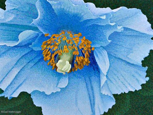 Buy Blue Poppy 9 X 12 Print