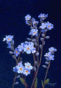 Art Card Forget Me Not