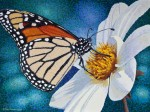 "Buy ""Monarch"" Butterfly Fine Art Print"
