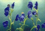 """Monkshood"" Art Print – Sold Out"