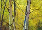 "Buy Giclee Art Print – ""Paper Birch"""