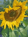 "Buy Giclee on Canvas – ""Sunflower"" 16″ x 21.5″"