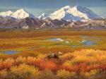 """""""Tundra Bull"""" Bull Moose Art Print"""