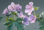 Buy Art Card – Wild Geranium