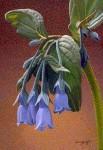 Art Card – Bluebells