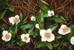 Art Card – Dwarf Dogwood
