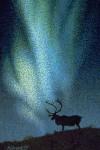 Northern Lights Note Card – Green Aurora