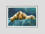 Buy Sea Lion 4″ x 6″ Art Print