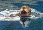 Sea Otter Note Card – Whiskers