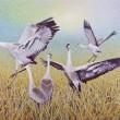 "Buy Sandhill Crane - Wing Dancing 39"" x 49"" Art Print"