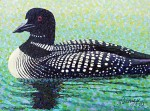"Buy ""Common Loon"" Mini Art Print by artist Gail Niebrugge"