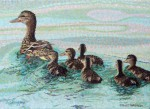 "SOLD Original Painting ""Proud Mamma"" Mallard Ducks"