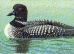 """Common Loon"" Mini Art Print"