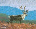 Niebrugge Note Card – Caribou One