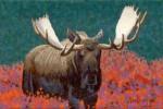 Art Card – Moose Two