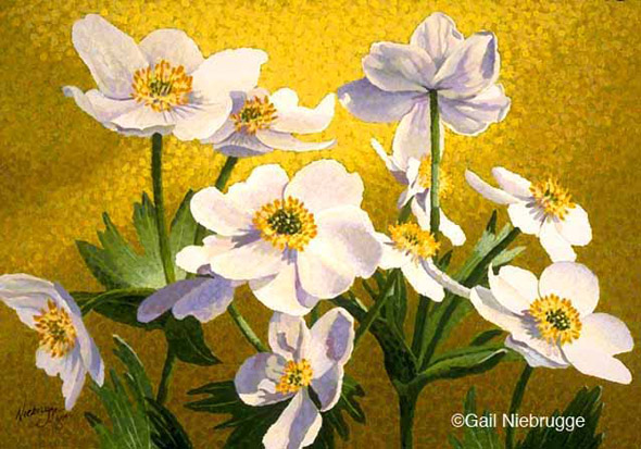 "Buy Original Painting - ""Narcissus Flowered Anenome"""