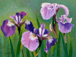 SOLD Original Painting Wild Iris by Gail Niebrugge