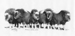 "SOLD Palmer Museum Acquisition Ink Drawing ""Musk Ox"""