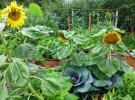 Artist Garden Jungle Needs Tending