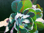 "Buy ""Cabbage"" Original Painting by Artist Gail Niebrugge"