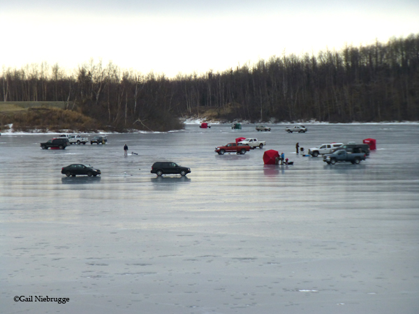 The weather has been perfect for an ice fishing derby not too cold no wind and a snow free lake surface. Great for ice skating as well. & IceFishing2.jpg