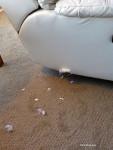 Puppy Damage