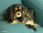 National Dog Day; Miss Princess