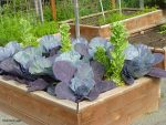 Cabbage and Lettuce Towers