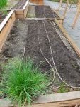 Vegetable Garden Seeds Planted