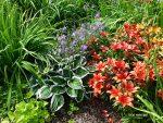 Perennial Explosion, Petunia Pot