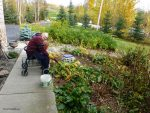 Cutting Back Perennials